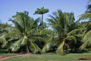 - Image of big palms -