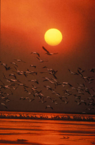 - Image Sunset with pelicans