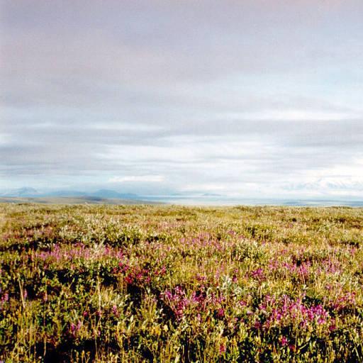 - spirituality religion Tundra -