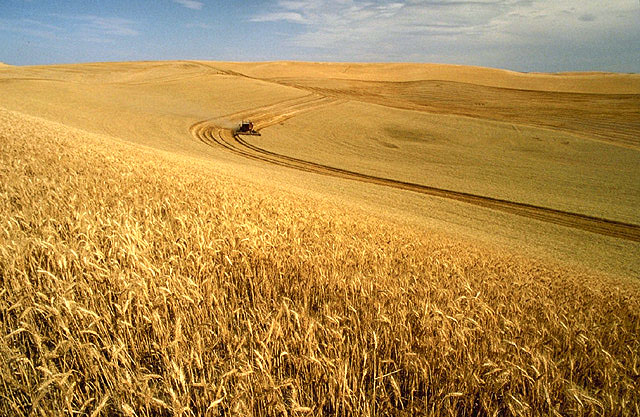spirituality religion wheat