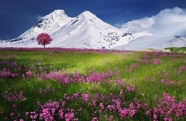 spiritual flowers