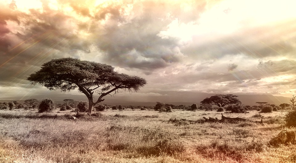reaching africa
